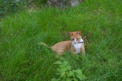Cat, nature, animal, pets, spring, summer stock photos