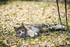 Cat. On the yellow leaves Royalty Free Stock Photos