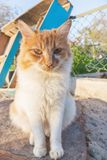 The cat. yellow and white stray cat. The cat. yellow and white stray cat royalty free stock photography