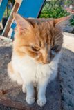 The cat. yellow and white stray cat. The cat. yellow and white stray cat stock photography