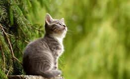 Cat, Young Animal, Curious, Wildcat Royalty Free Stock Photo