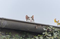 Cat. A young lurking cat sitting on a rooftop Stock Photos