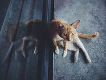 Young cat. A young cat sit on the floor Stock Photos