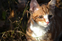 Cat. A young cat in the sunlight Stock Photos