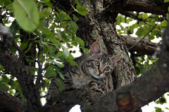 Cat. Young cat on the tree Stock Photography