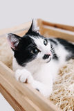 Cat. Young cat in a wooden box Stock Photo