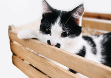 Cat. Young cat in a wooden box Royalty Free Stock Photo