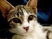 cat16 Arkivfoton