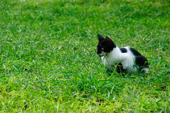 cat2草 库存照片
