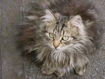 Cat2 stock photography