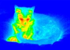 cat2 sypialny termograf Fotografia Stock
