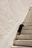 Cat3 nero Fotografia Stock