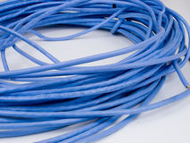 cat5cable2 Royaltyfria Foton