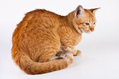 Cat6 Royalty-vrije Stock Afbeeldingen