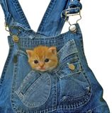 Cat82 Imagen de archivo libre de regalías