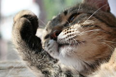 Cat9 Royalty Free Stock Photography