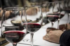 Wine tasting in Burgos, Spain stock photos