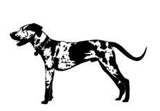 Catahoula Royalty Free Stock Image