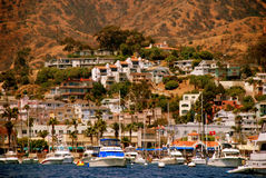 Catalina Royalty Free Stock Photos