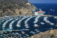 Catalina Images stock