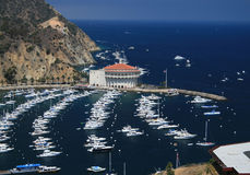 Catalina Royalty Free Stock Images