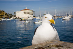 Catalina Casino And Seagull Royalty Free Stock Photography
