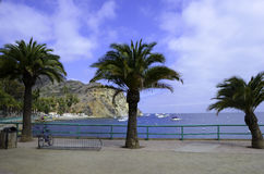 Catalina Island Harbor Royalty-vrije Stock Fotografie