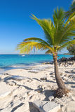 Catalina island - Playa de la isla Catalina - Caribbean tropical sea Stock Images