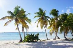 Catalina Island, República Dominicana Imagem de Stock