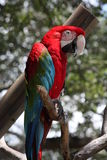 Catalina macaw Stock Photos
