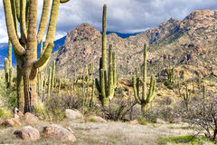 Catalina Mountains Imagem de Stock Royalty Free