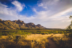 Catalina Mountains. Beautiful view of Catalina Mountains from a hiking path at Catalina State Park in Tucson, Arizona Stock Photos