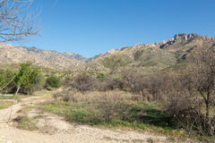 Catalina State Park Images stock