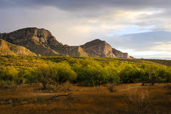 Catalina State Park, couleurs vives Image libre de droits