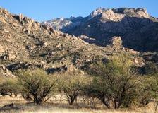Catalina State Park de Arizona Foto de archivo libre de regalías