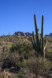 Catalina State Park Royalty Free Stock Photography