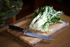 Puntarelle Or Catalonia Chicory. Catalonia chicory or puntarelle in Italian, on wooden board with knife. This type of chicory is a traditional vegetable used in Royalty Free Stock Image