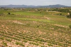 catalonia vingårdar Arkivbilder