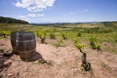catalonia winnica zdjęcie royalty free