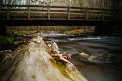 Cataloochee Creek Stock Photos