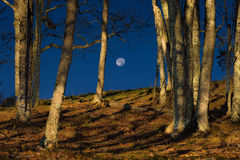 Cataloochee Valley moonset Stock Image