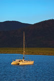 Catamaran Moored in Cairns at Sunrise Stock Images