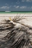 Catamaran and palm leaf at Cayo Blanco, Cuba Stock Images