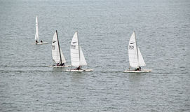 Catamaran Race Royalty Free Stock Photo