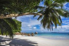 Paradise beach on the seychelles 23 Royalty Free Stock Image