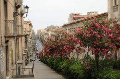 Catania Street Scene. Long street with colorful trees and buildings, Catania city, Sicily, Italy royalty free stock photo