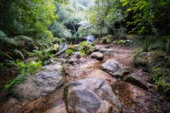 Foggy morning at South Lawson in Blue Mountains. Cataract Creek, Five Waterfalls Circular Walking Track, South Lawson, Blue Mountains, New South Wales, Australia Royalty Free Stock Photography