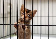 Cataract Rescue Kitten. Cataract blind rescue kitten in the cage Stock Image