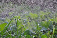 Cataracte (grande pluie) Photos stock