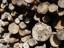 Catasta di legna Fotografia Stock Libera da Diritti